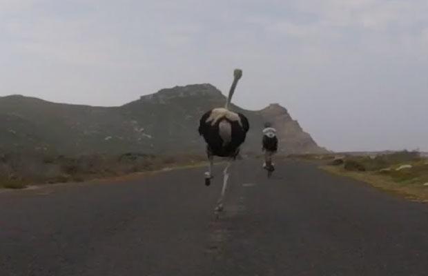 avestruz versus biker